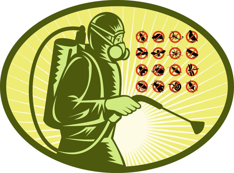 Control de plagas elche archivos limpiezas elche - Plaga hormigas en casa ...